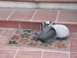 Cats, Vecchia Masseria