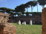 Umbrella pines along the walkway between the Palatine Hill and the Forum