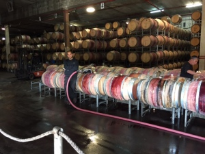 Dalton Winery red wine barrels- the winemaker trained at Navarro Vineyards in Anderson Valley about 13 years ago.