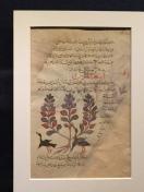 A medicinal manuscript