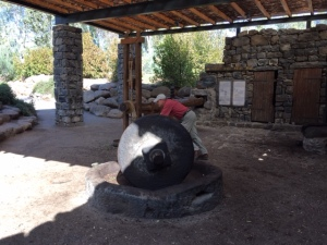 Turning the olive press.