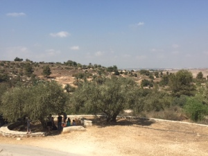 This gives you an idea of what the landscape looked like in biblical times.  It hasn't changed a whole lot since them.  It has been quite hot here but is starting to cool down a little.
