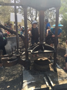 Olive trees have existed in this region for 1000s of years and are an important source of shade, food, and of course oil.  This is obviously a more modern version where the olives are put into those special baskets and then pressed to release the oil.