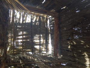 Looking up through the roof of the too tall sukkah.
