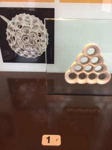 Back to Gaudi's philosophy of using natural forms, in this case a protozoa.
