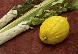 The lulav is made up of a palm branch (representing the spine), myrtle branches (representing the eyes), and willow branches (representing the mouth). The etrog is a citron that represents the heart.