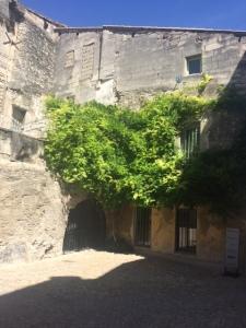 Tenacious wisteria